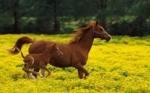 Комбикорм для лошадей