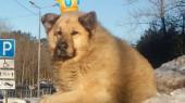 Пес Кефир – Лучшая собака России